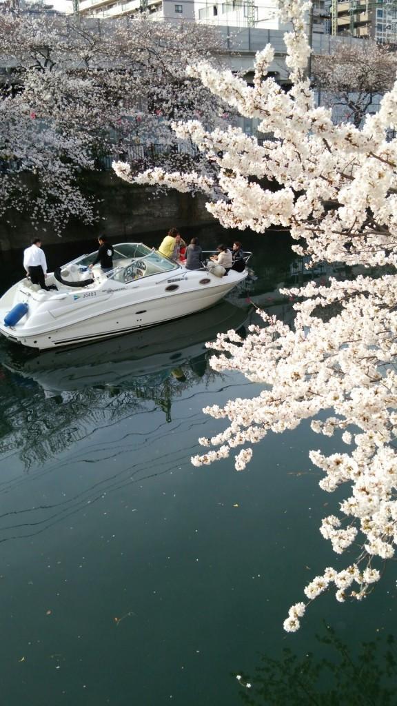 大岡川桜まつり2